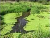 Cyanobacteria-by-greendiary