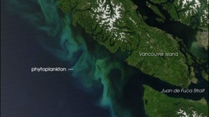 phytoplankton_bloom-400x225