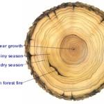 tree_rings.v2-150x150