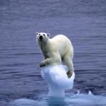 Jk4_Polar-bear-for-abrupt-climate-change-150x150