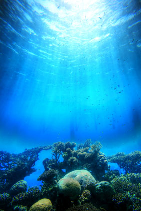 Ocean Acidification And The Short Term Marine Carbon